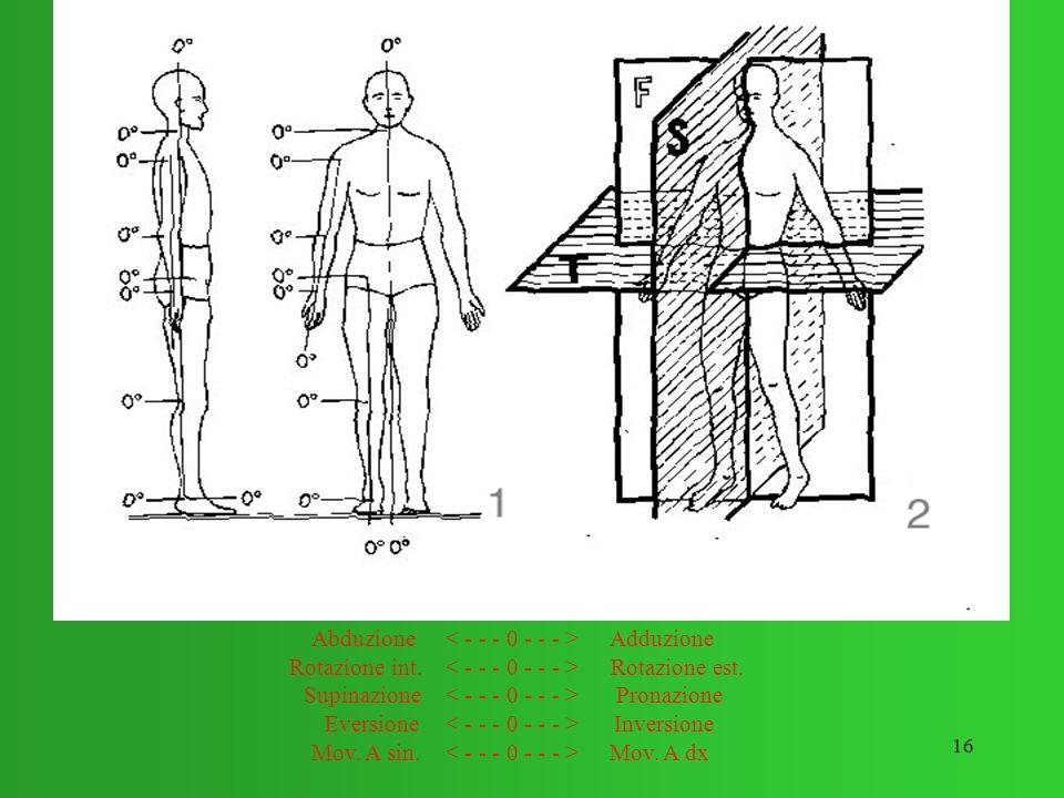 Rotazione int. Rotazione est. Supinazione Pronazione