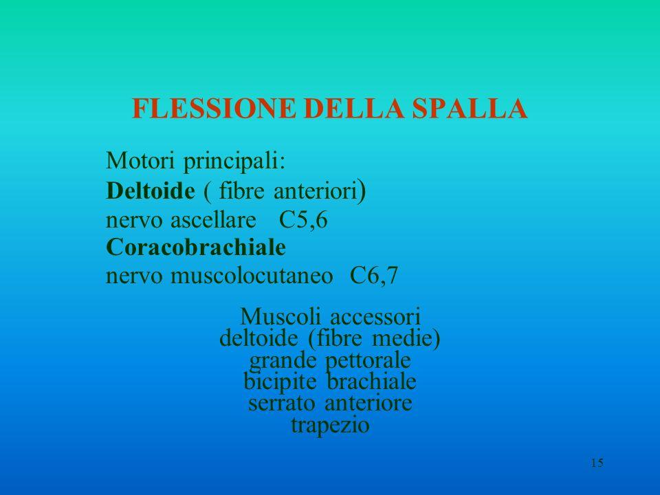 FLESSIONE DELLA SPALLA