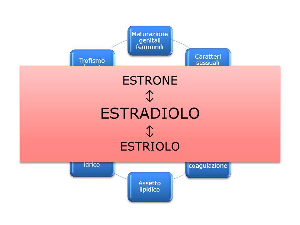 ESTRADIOLO Estrogeni ESTRONE ↕ ESTRIOLO Maturazione genitali femminili