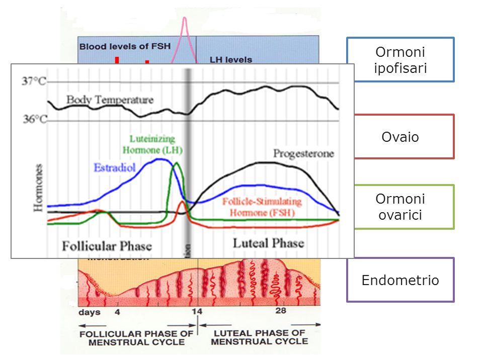 Ormoni ipofisari Ovaio Ormoni ovarici Endometrio