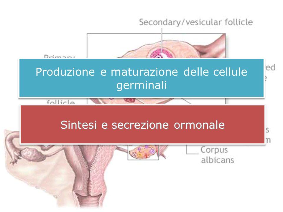 Produzione e maturazione delle cellule germinali