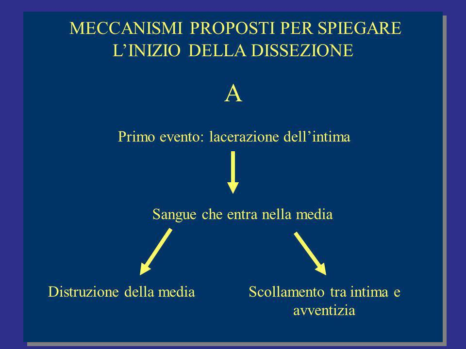 A MECCANISMI PROPOSTI PER SPIEGARE L'INIZIO DELLA DISSEZIONE