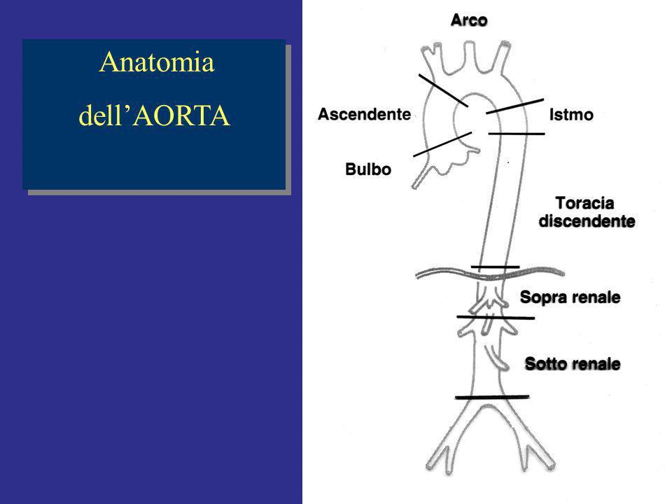 Anatomia dell'AORTA