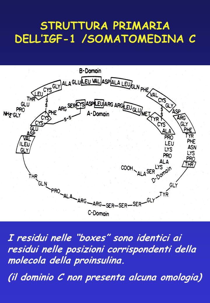 STRUTTURA PRIMARIA DELL'IGF-1 /SOMATOMEDINA C