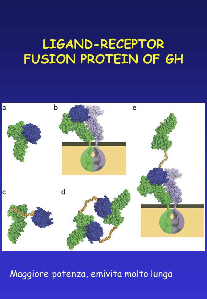 LIGAND-RECEPTOR FUSION PROTEIN OF GH