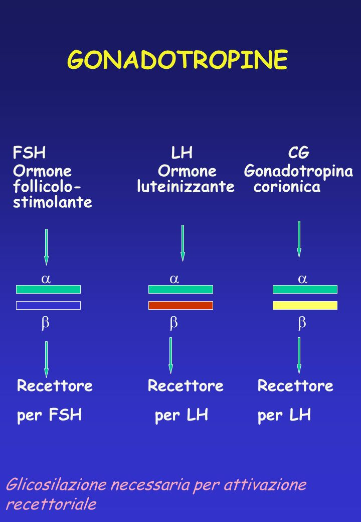 GONADOTROPINE FSH LH CG Ormone Ormone Gonadotropina