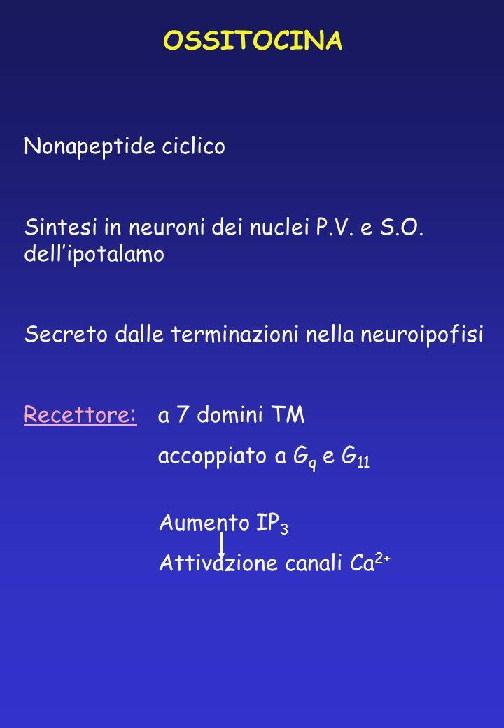 OSSITOCINA Nonapeptide ciclico