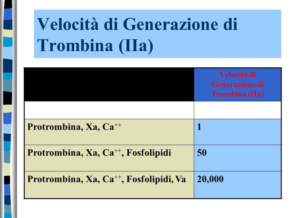 Velocità di Generazione di Trombina (IIa)