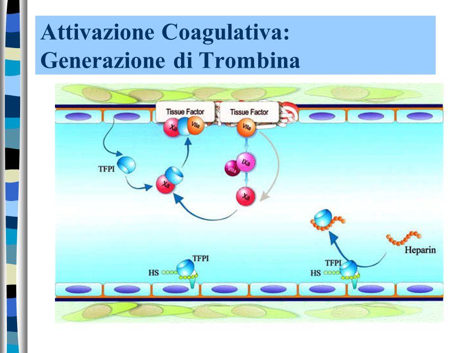 Attivazione Coagulativa: Generazione di Trombina