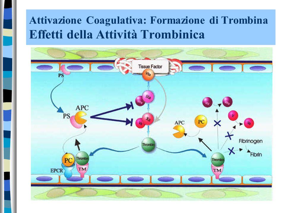 Attivazione Coagulativa: Formazione di Trombina Effetti della Attività Trombinica