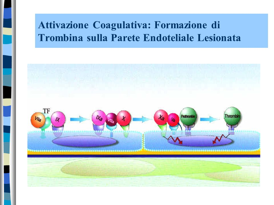 Attivazione Coagulativa: Formazione di Trombina sulla Parete Endoteliale Lesionata