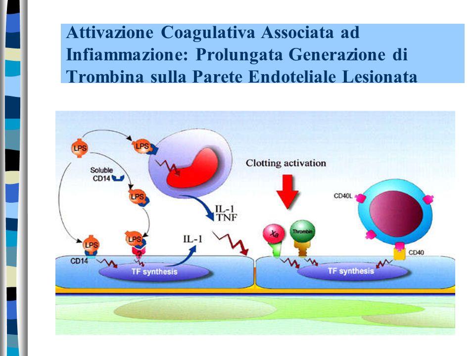 Attivazione Coagulativa Associata ad Infiammazione: Prolungata Generazione di Trombina sulla Parete Endoteliale Lesionata