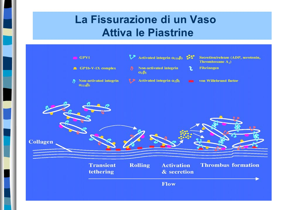 La Fissurazione di un Vaso Attiva le Piastrine