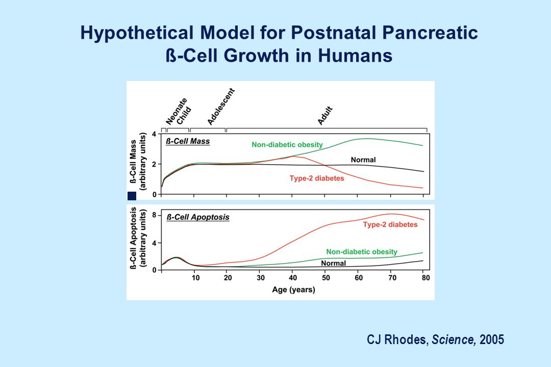 Hypothetical Model for Postnatal Pancreatic ß-Cell Growth in Humans