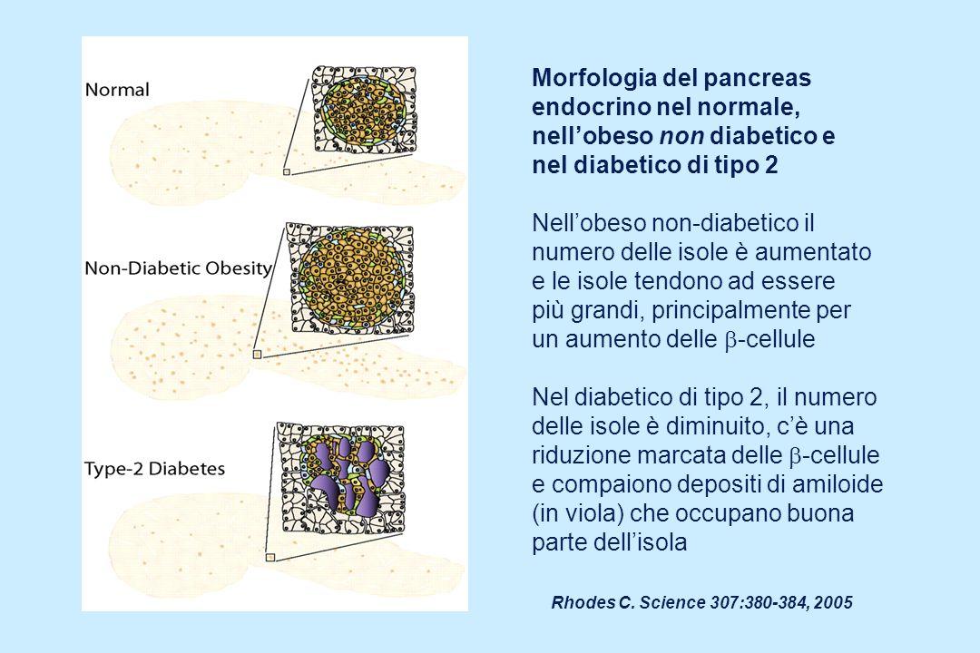 Morfologia del pancreas endocrino nel normale,
