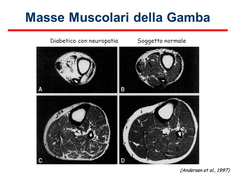 Masse Muscolari della Gamba