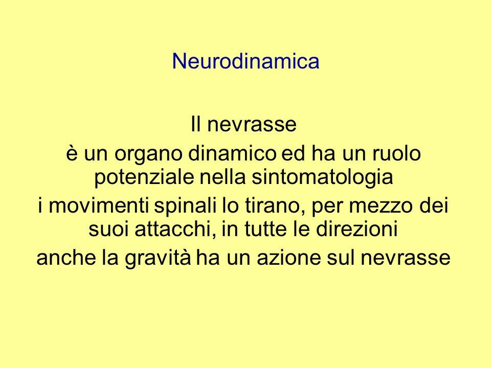 è un organo dinamico ed ha un ruolo potenziale nella sintomatologia