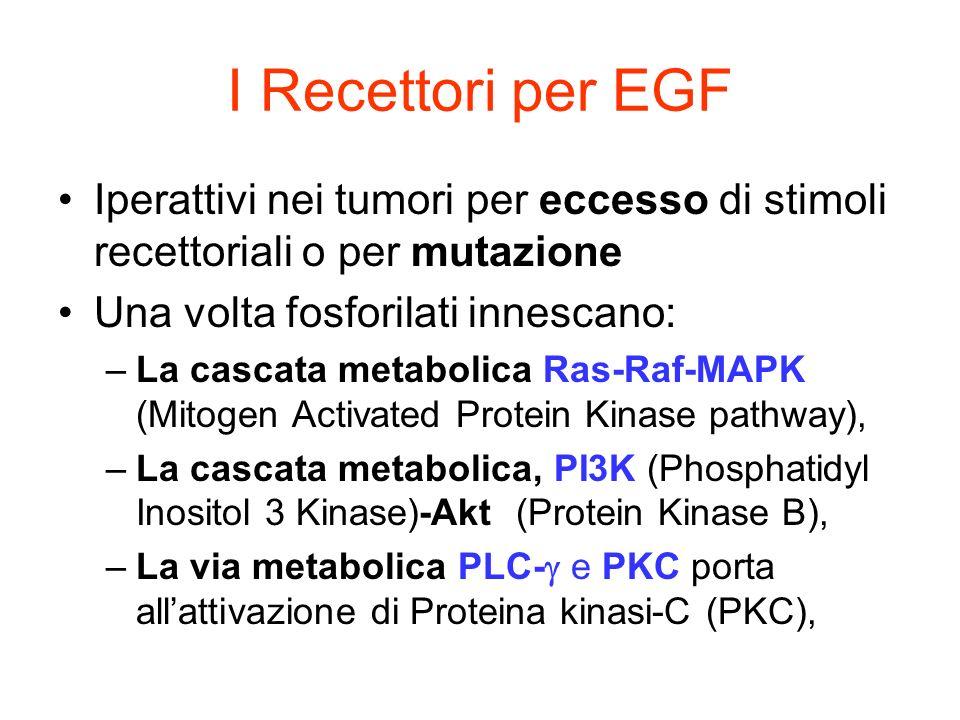 I Recettori per EGFIperattivi nei tumori per eccesso di stimoli recettoriali o per mutazione. Una volta fosforilati innescano: