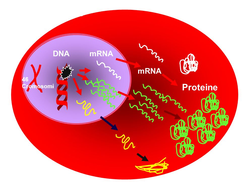 cellula tumorale mRNA Proteine DNA mRNA 46 Cromosomi