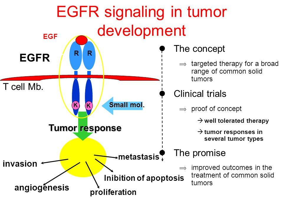EGFR signaling in tumor development