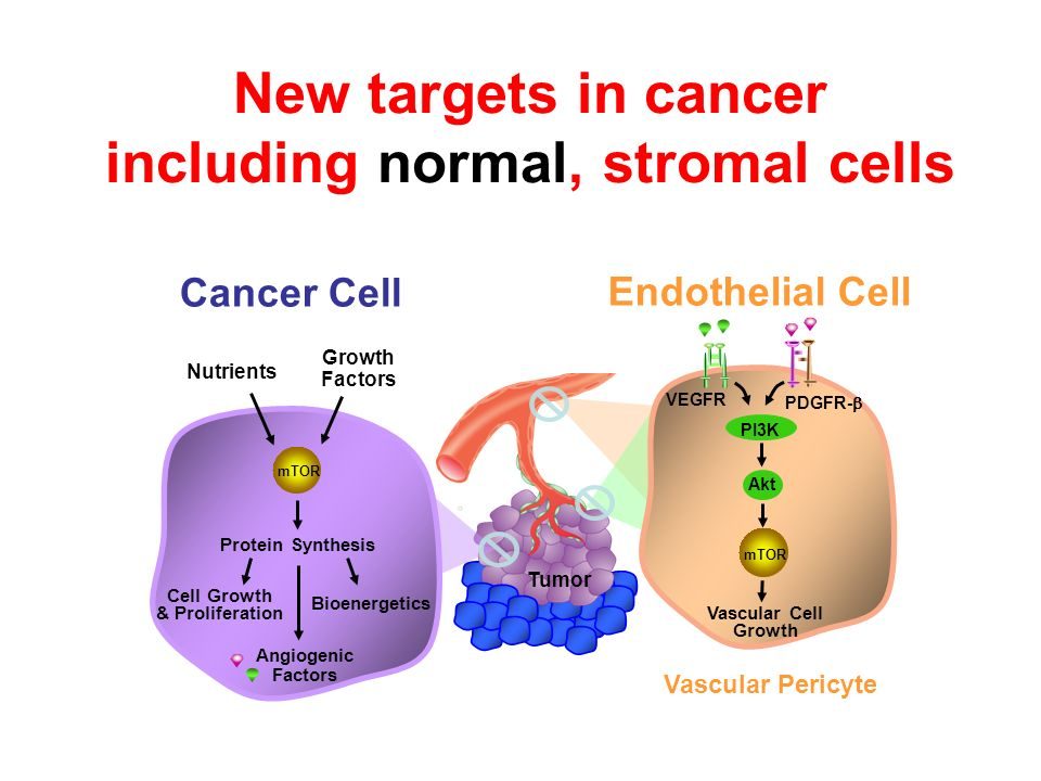 New targets in cancer including normal, stromal cells