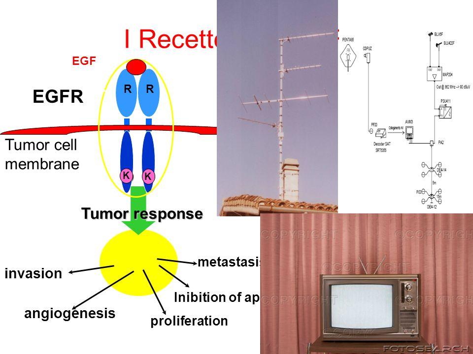 I Recettori per EGF EGFR Tumor cell membrane Tumor response invasion