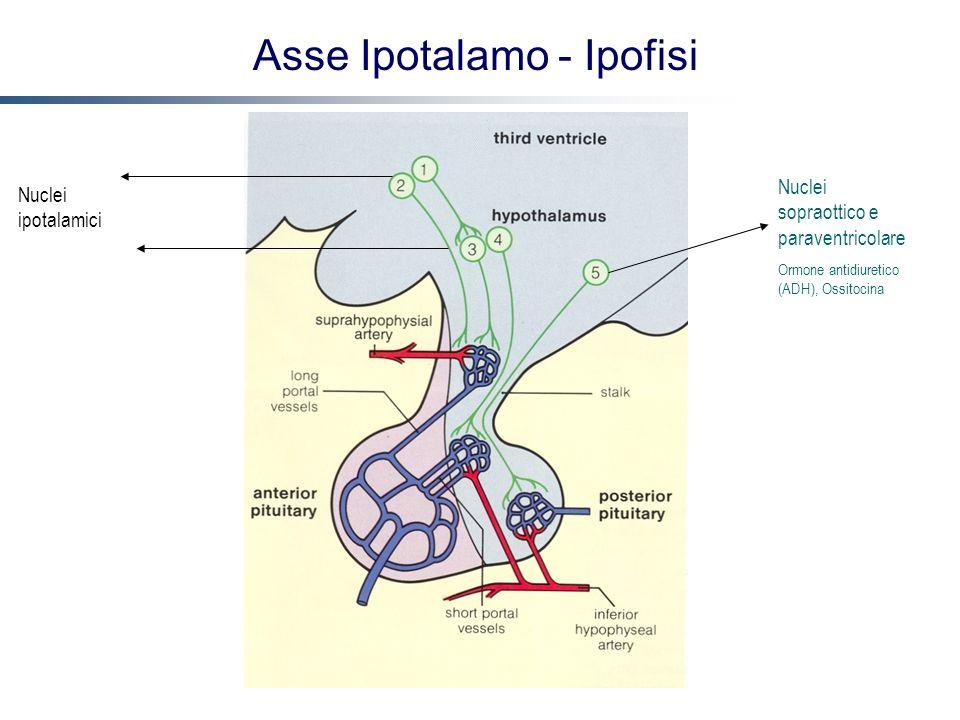 Asse Ipotalamo - Ipofisi