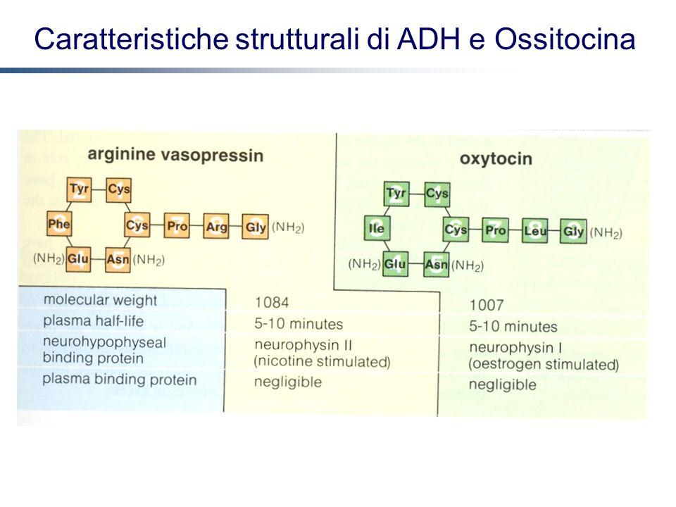 Caratteristiche strutturali di ADH e Ossitocina