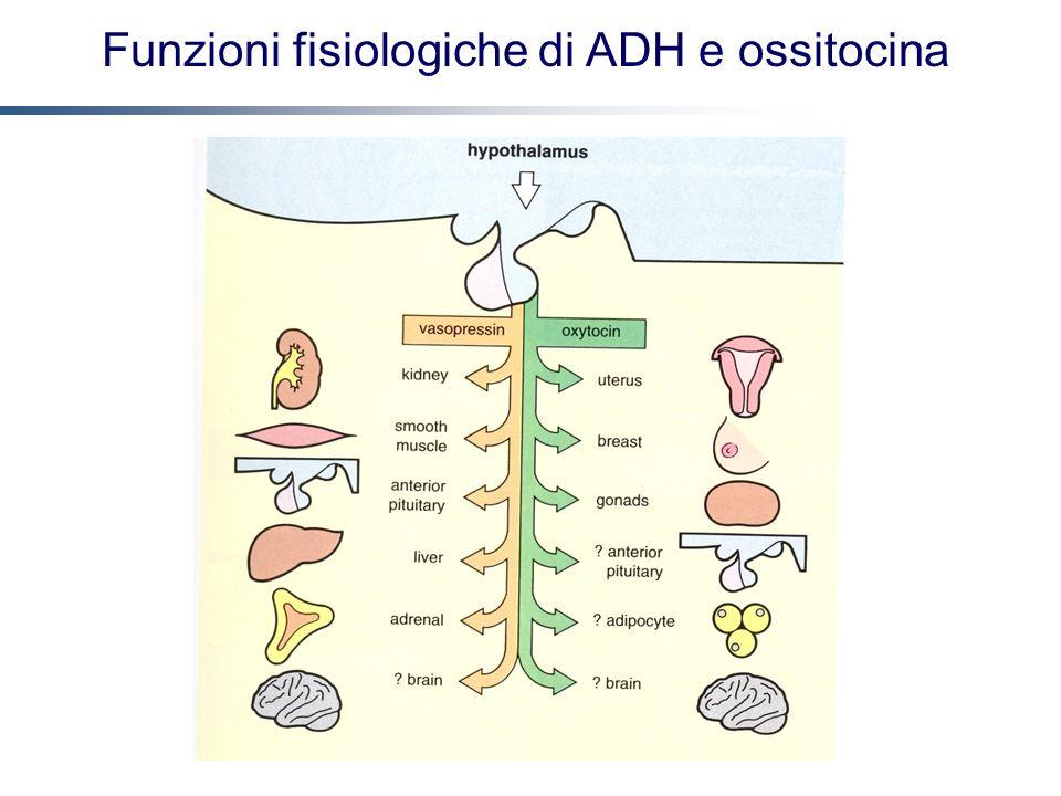 Funzioni fisiologiche di ADH e ossitocina