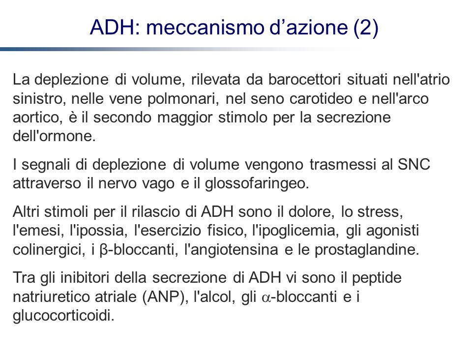 ADH: meccanismo d'azione (2)