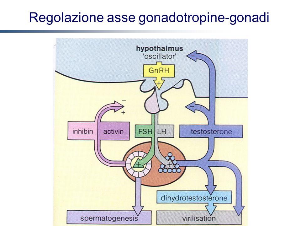 Regolazione asse gonadotropine-gonadi