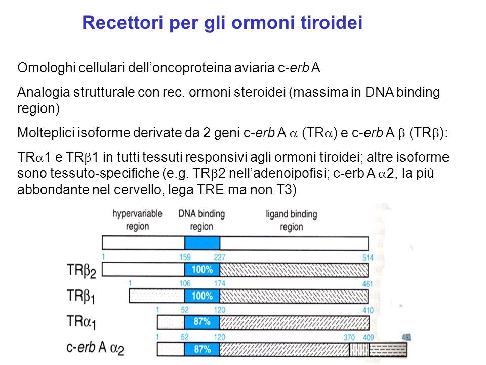 Recettori per gli ormoni tiroidei