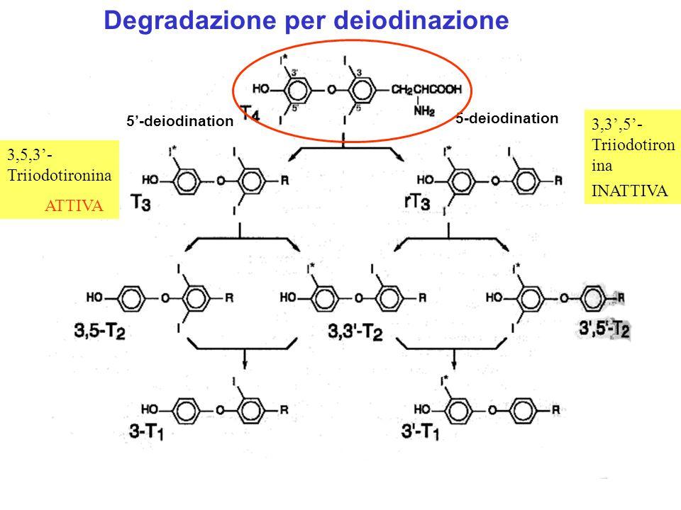 Degradazione per deiodinazione