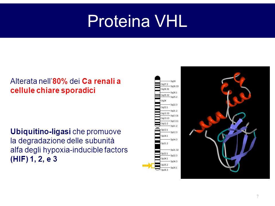 Proteina VHL Alterata nell'80% dei Ca renali a cellule chiare sporadici.