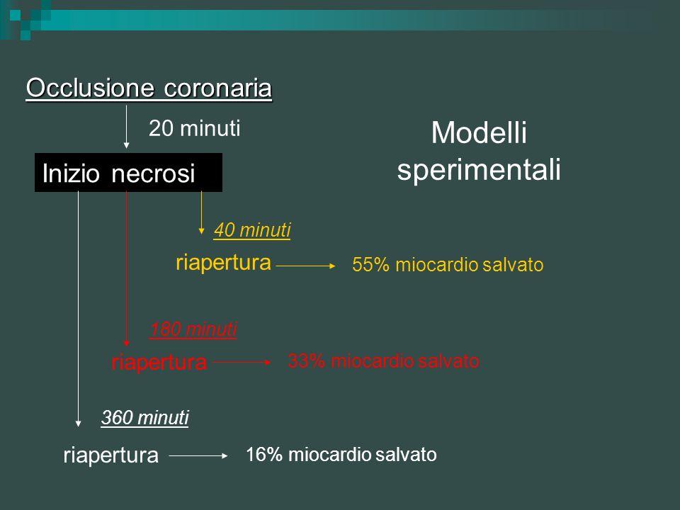Modelli sperimentali Occlusione coronaria Inizio necrosi 20 minuti