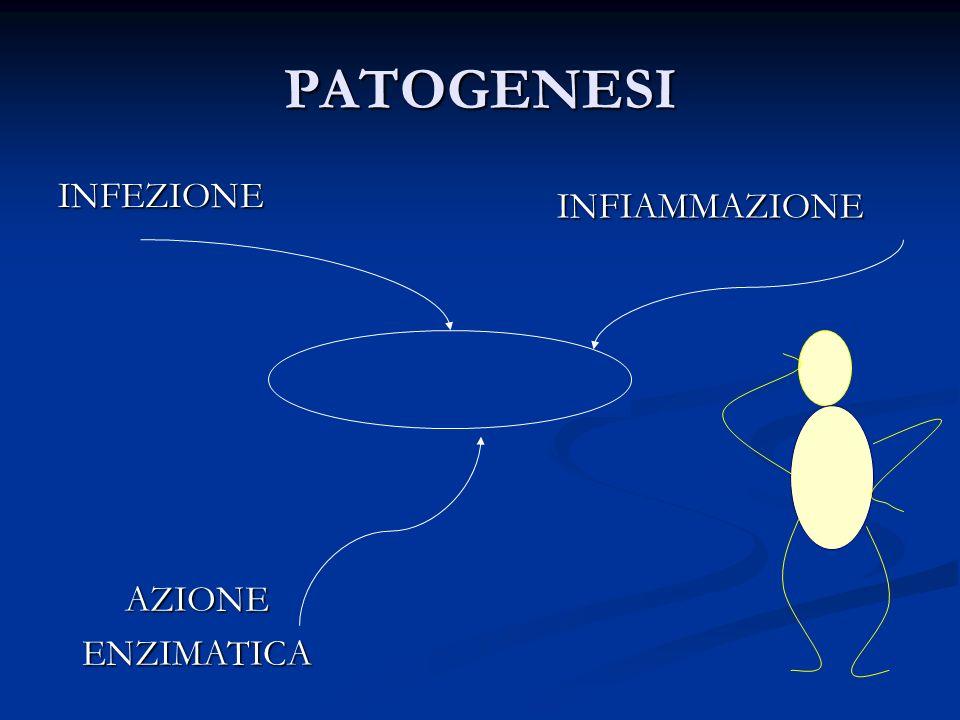 PATOGENESI INFEZIONE INFIAMMAZIONE Bronchiectasie AZIONE ENZIMATICA