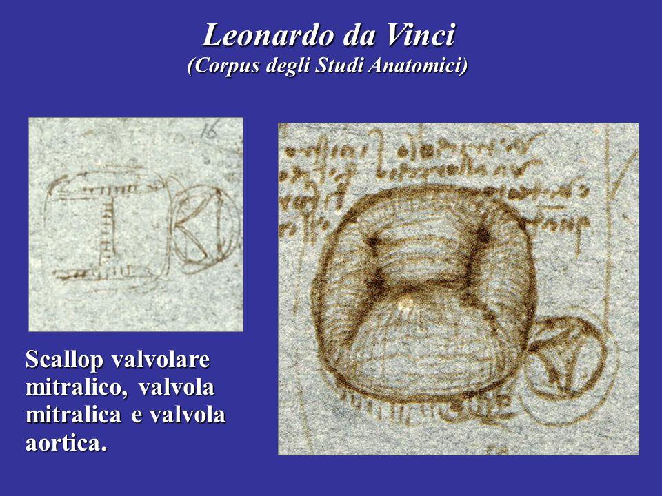 Leonardo da Vinci (Corpus degli Studi Anatomici) Scallop valvolare mitralico, valvola mitralica e valvola aortica.
