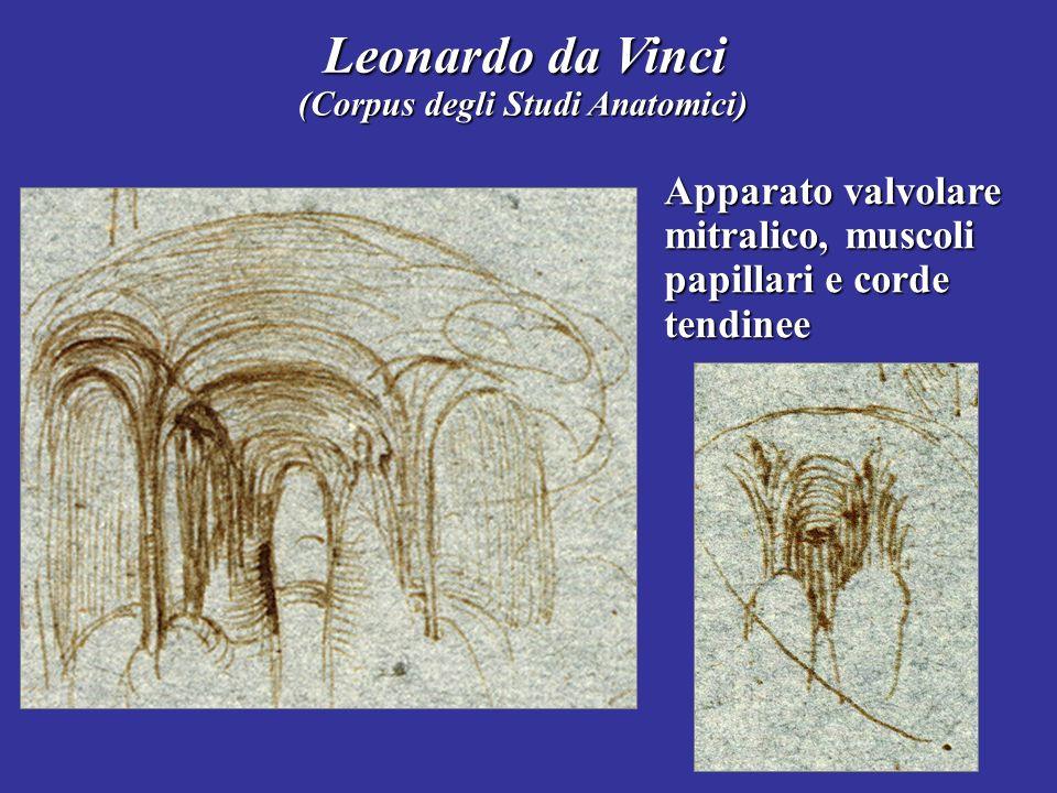 Leonardo da Vinci (Corpus degli Studi Anatomici) Apparato valvolare mitralico, muscoli papillari e corde tendinee.