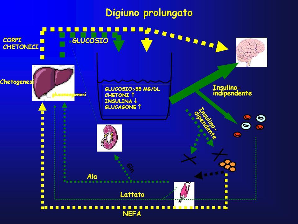 Digiuno prolungato GLUCOSIO Insulino- indipendente Insulino-