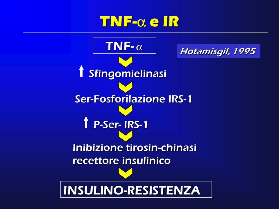 TNF- e IR TNF-  INSULINO-RESISTENZA Sfingomielinasi