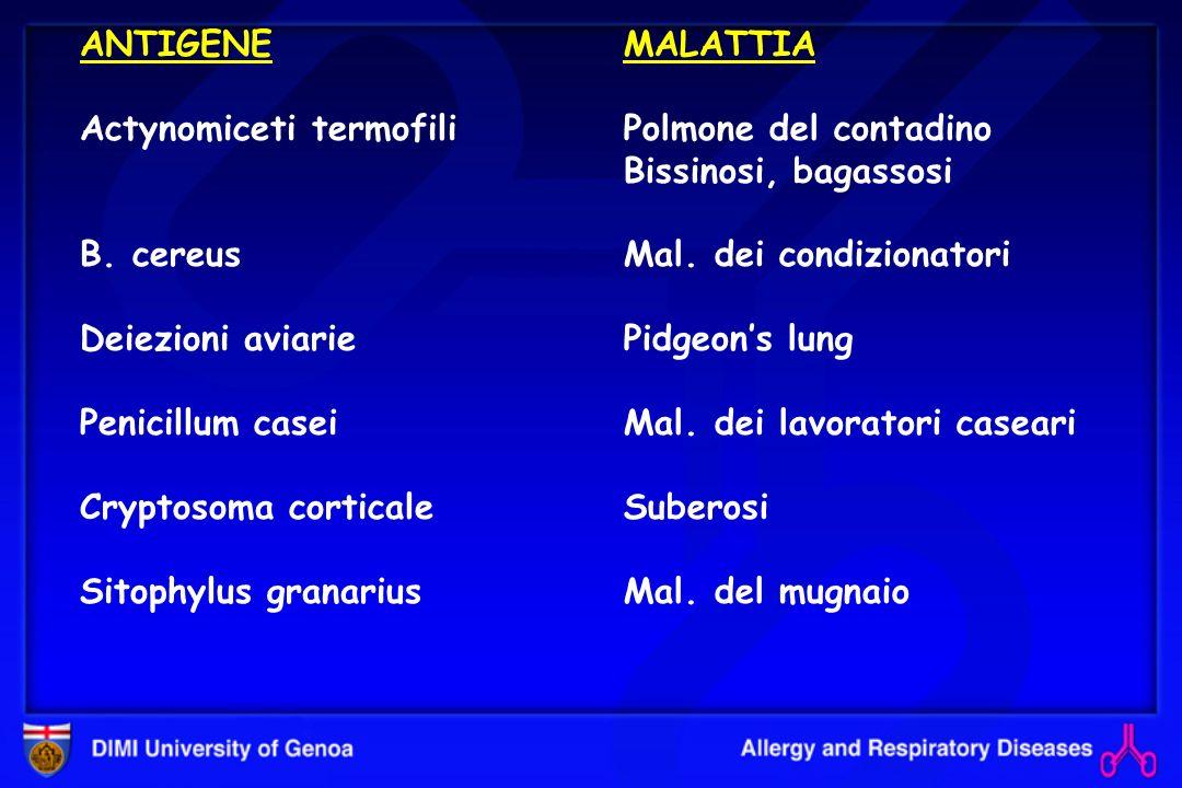 ANTIGENEActynomiceti termofili. B. cereus. Deiezioni aviarie. Penicillum casei. Cryptosoma corticale.