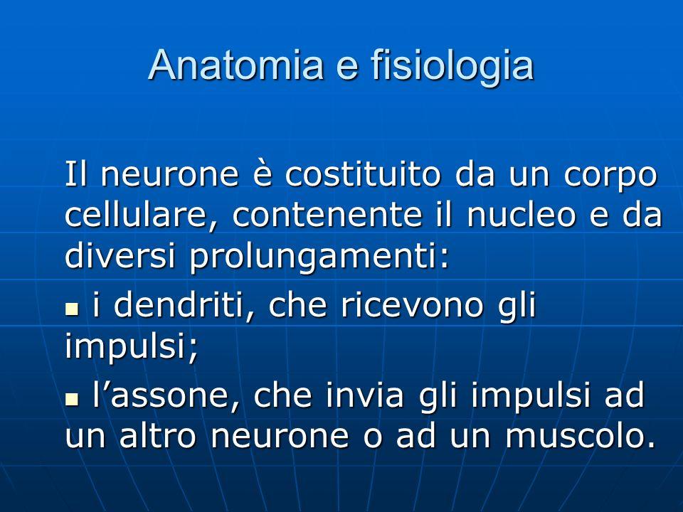 Anatomia e fisiologia Il neurone è costituito da un corpo cellulare, contenente il nucleo e da diversi prolungamenti: