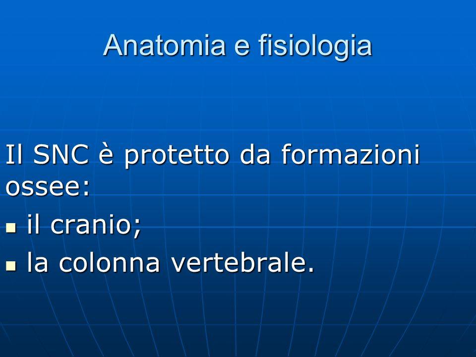 Anatomia e fisiologia Il SNC è protetto da formazioni ossee:
