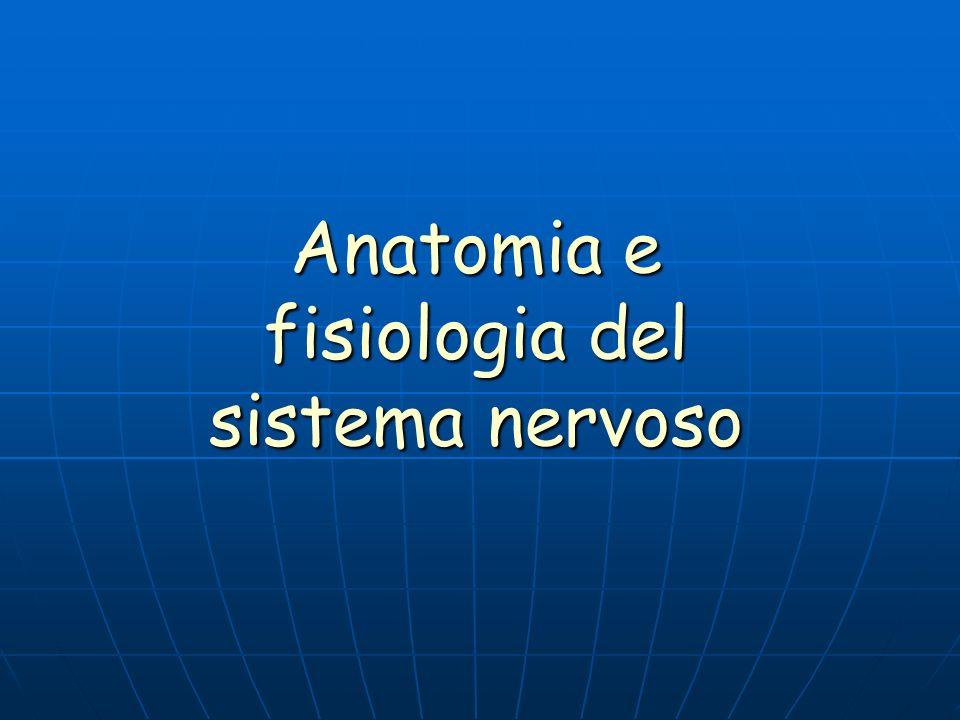Anatomia e fisiologia del sistema nervoso
