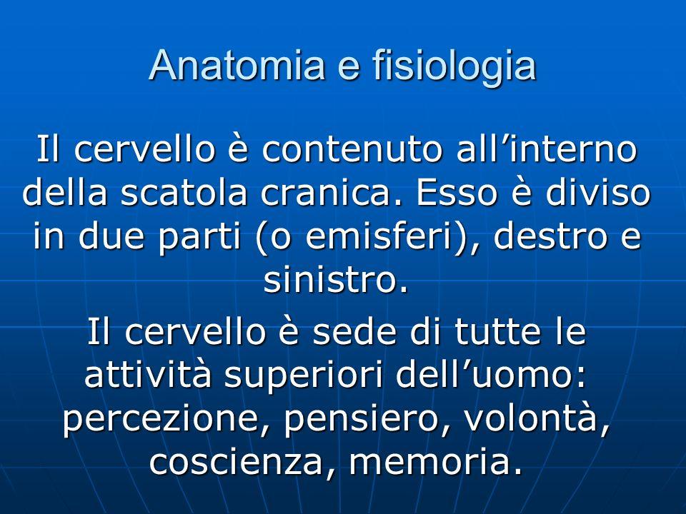 Anatomia e fisiologia Il cervello è contenuto all'interno della scatola cranica. Esso è diviso in due parti (o emisferi), destro e sinistro.