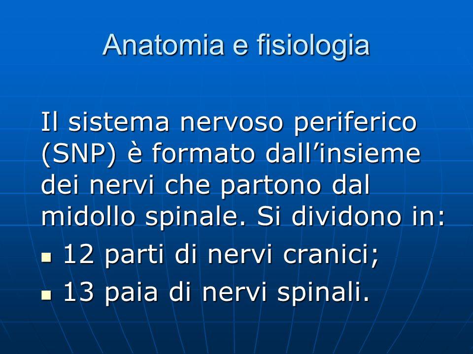 Anatomia e fisiologia Il sistema nervoso periferico (SNP) è formato dall'insieme dei nervi che partono dal midollo spinale. Si dividono in: