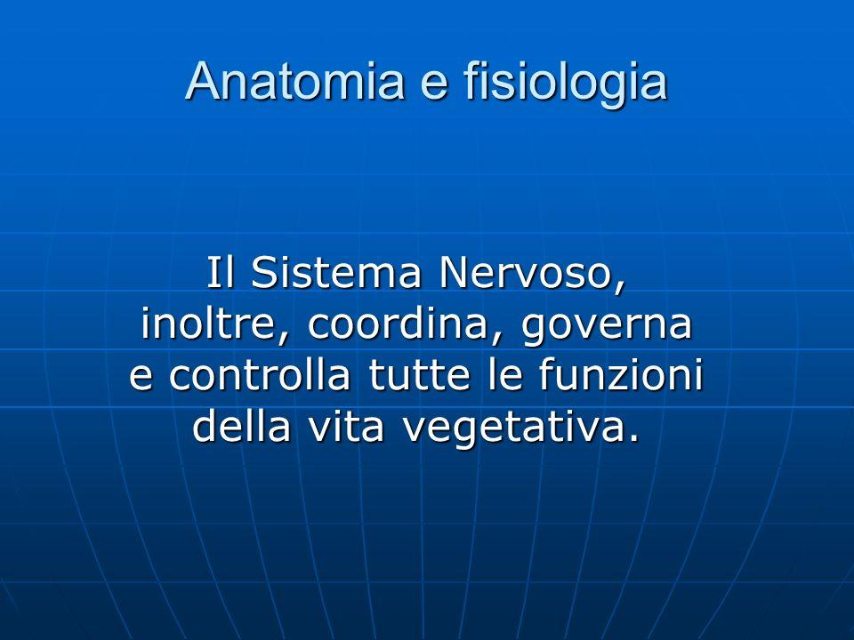 Anatomia e fisiologia Il Sistema Nervoso, inoltre, coordina, governa e controlla tutte le funzioni della vita vegetativa.