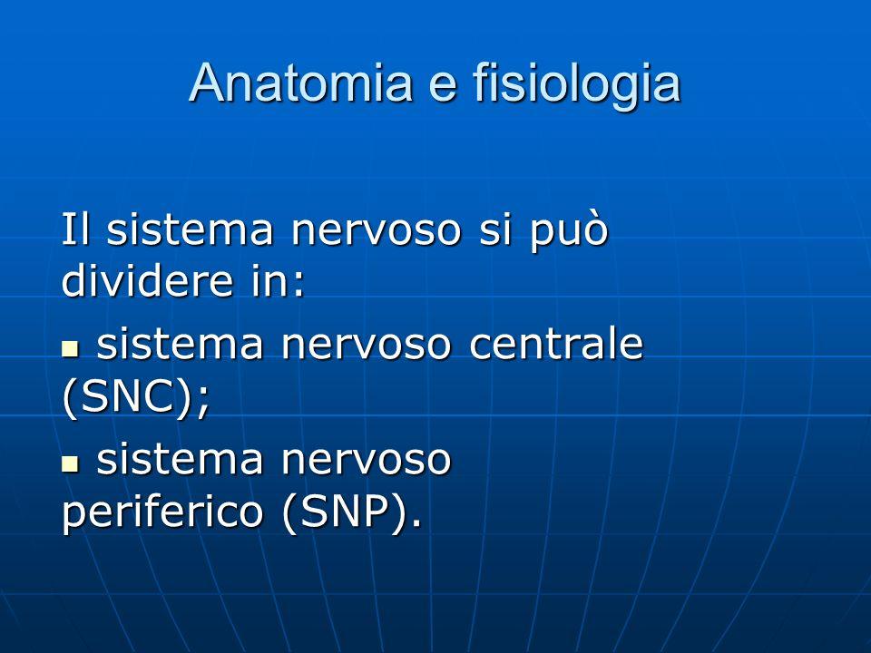 Anatomia e fisiologia Il sistema nervoso si può dividere in: