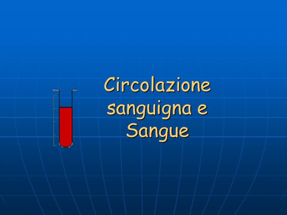 Circolazione sanguigna e Sangue