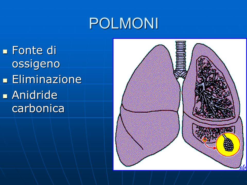 POLMONI Fonte di ossigeno Eliminazione Anidride carbonica